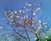 いきなり春